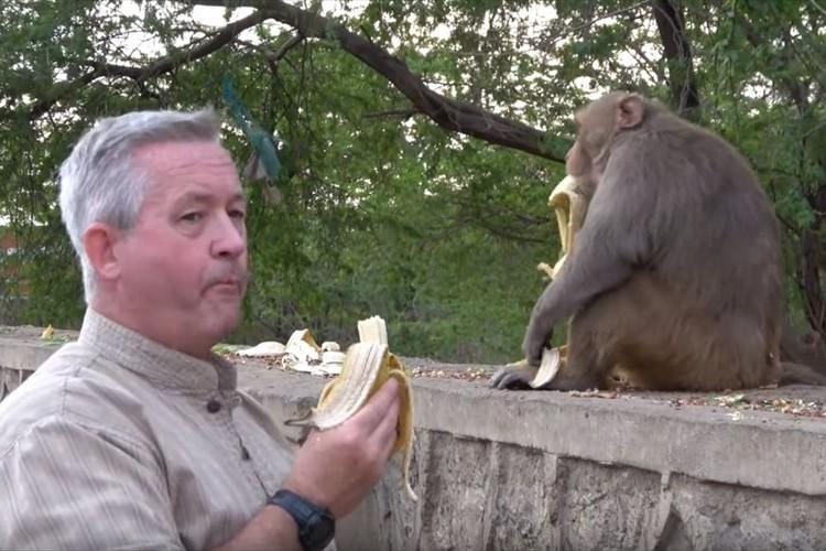 お前が食べるんかい(笑) 好物のバナナをめぐる、目ざとくて欲張りなサルの行動が面白い!