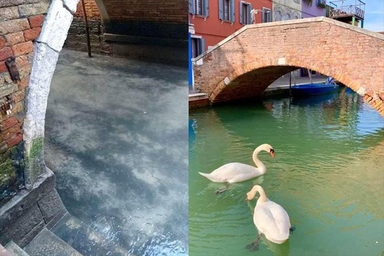 ヴェネツィア封鎖以来、水がきれいになって魚や白鳥の姿が見られるように・・・そしてイルカの姿も!