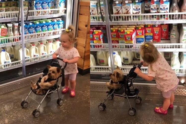 お母さん気分でお買い物ごっこをする少女が可愛らしい!子ども役はワンコ(笑)