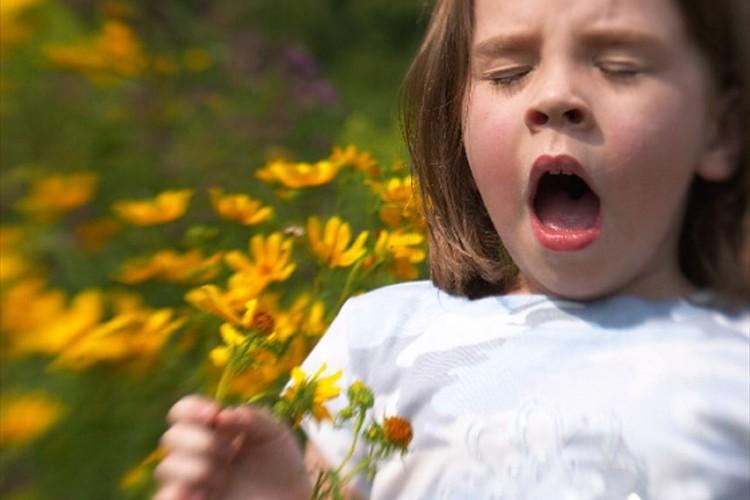 日本の約2人に1人が花粉症!?花粉症に罹患している人の割合が最も多い都道府県は?