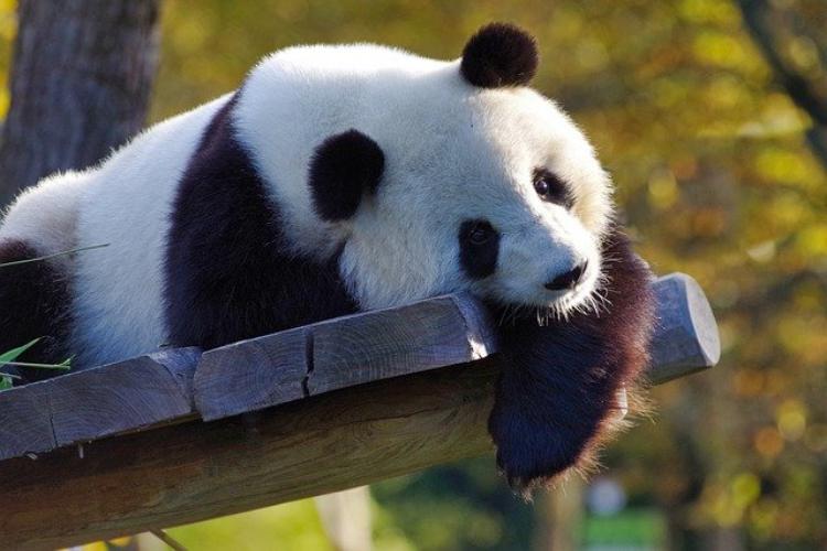 動物園に行ったらぜひ会いたい!世界三大珍獣と呼ばれる動物をご紹介!