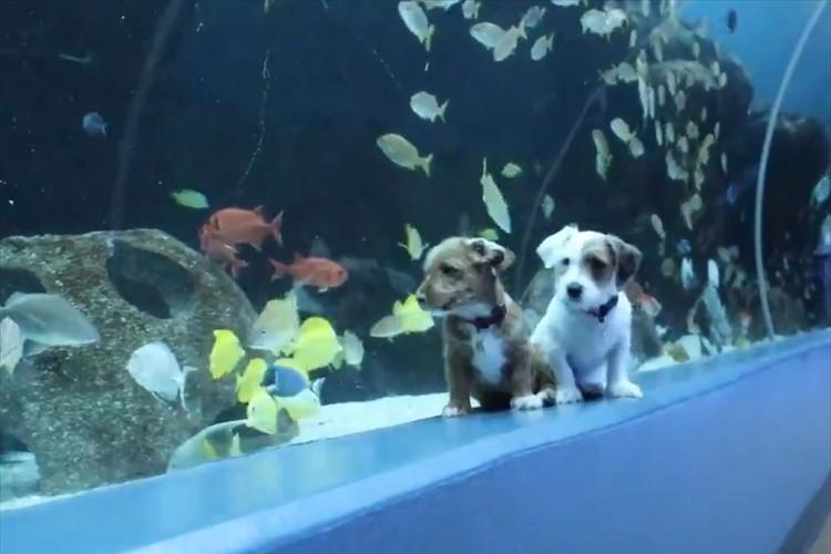 保護犬たちが臨時閉館中の水族館を満喫!館内を走りまわったり魚たちにも興味津々