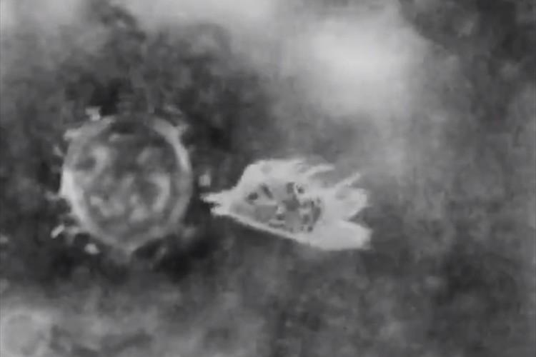 新型コロナウイルスを撃退する『アマビエ』の映像が話題に!「まさに人類の救世主」