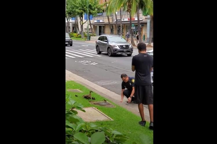 カモの家族が道路を横断できるよう通行止めに!警察官のやさしさ溢れる対応にほっこり