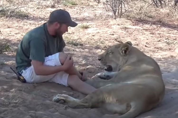 男性と戯れるライオンが猫のよう(笑) その場を去ろうとすると「行かないで!」と甘える
