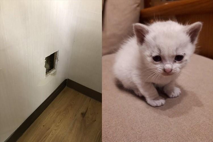 壁の中から鳴き声がしたので壁に穴を開けたら可愛い子猫が!その後、さらに驚きの展開に・・・