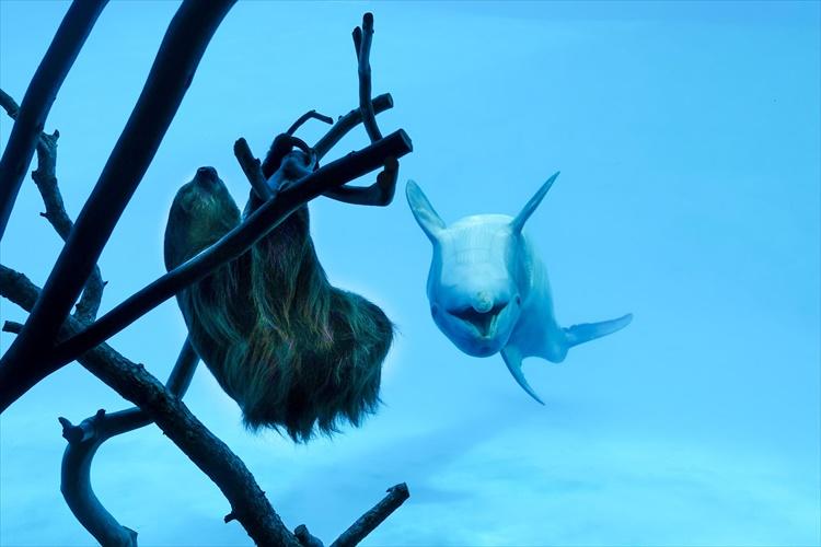 水族館の閉鎖が生んだ奇跡の出会い。ナマケモノに興味津々のイルカのリアクションが可愛い