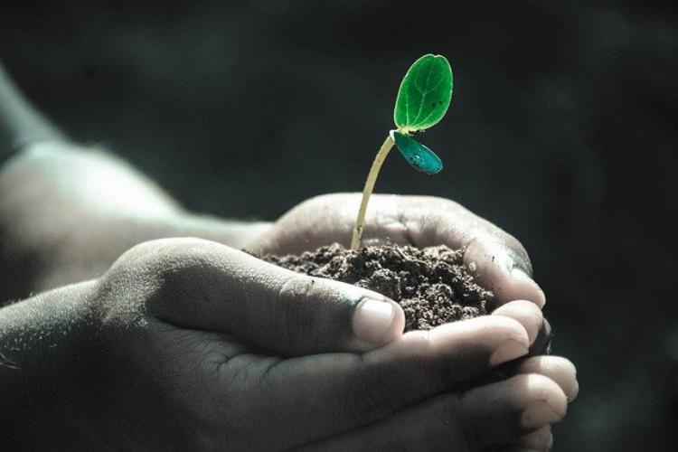 「成長」と「生長」の意味は違う?それとも同じ?使い分けもご紹介