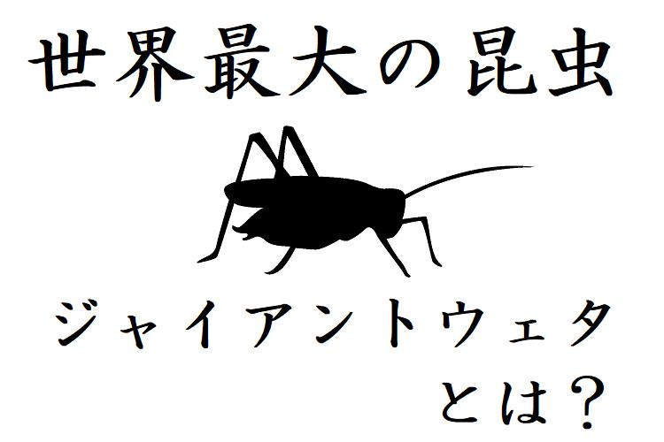 【ジャイアントウェタ】世界一巨大な昆虫はまさかのコオロギ!その驚異の大きさとは!?
