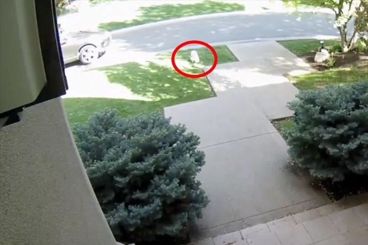 玄関から勢いよく飛び出していったワンコの横から車が接近!完全に轢かれたと思いきや・・・