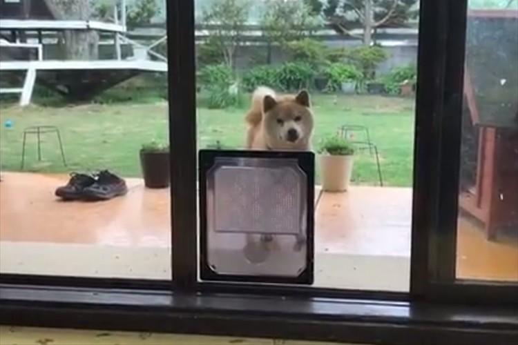 ペット用の出入り口を設置するも・・そう来たか(笑) 意表をつくワンコの行動が話題に!