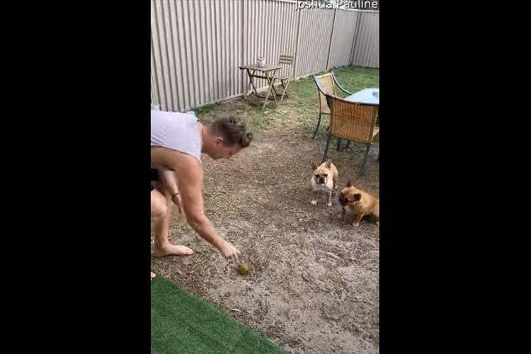 なぜ自分で走らない?(笑) 飼い主がボールを投げた瞬間、一匹のワンコがとった行動に爆笑