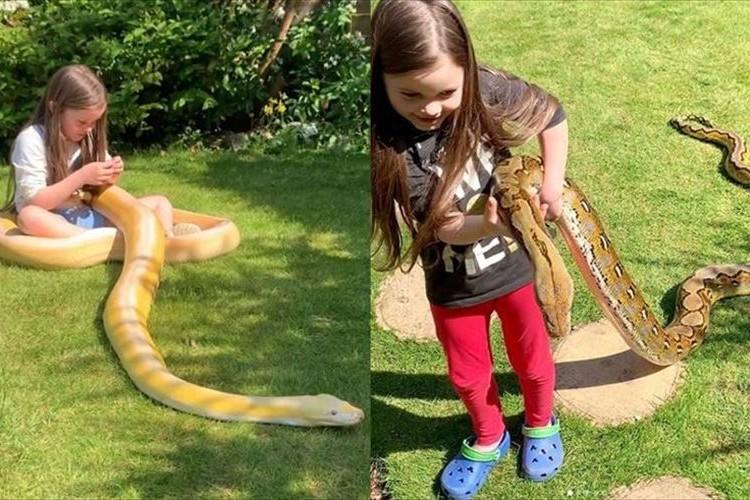 「彼らはとても優しく従順な動物です」ニシキヘビと寄り添って遊ぶ7歳の少女が話題に