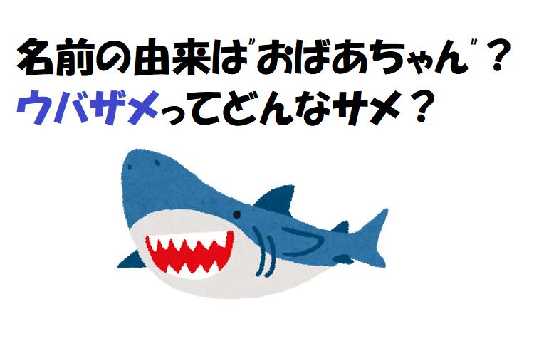 三大サメにも数えられるウバザメ、大人しいサメの名前の由来はおばあちゃん?