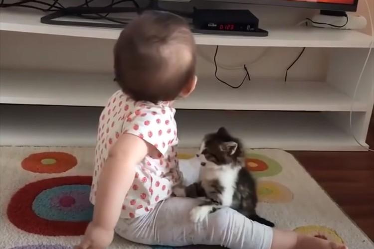 遊びたくて絡みまくるニャンコとガン無視の赤ちゃん(笑) 一進一退の攻防が可愛すぎる
