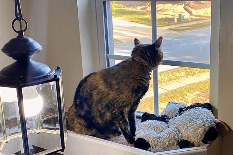 ニャンコが窓から外を眺められるように・・・飼い主が施した斬新なリフォームが素敵!