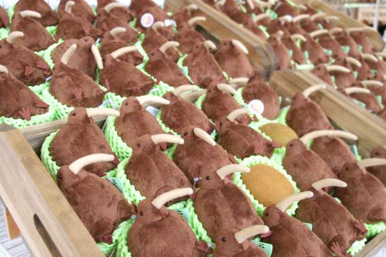 キウイにそっくりな動物「キーウィ」のマスコットが登場!売り方もキウイみたい(笑)