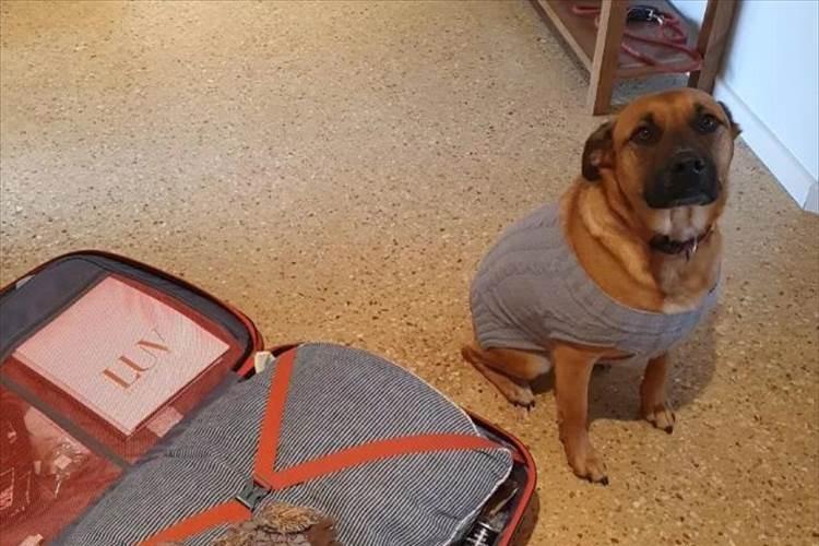 「一緒に行くワン!」荷物を詰めていたら愛犬がとある物を鞄に入れて猛アピール