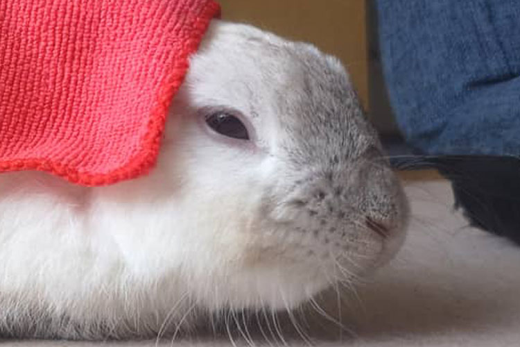 まるでマグロの握り寿司みたいなウサギが話題に「寿司を見る度に思い出しそう」