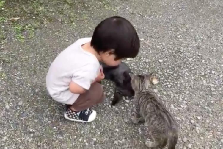 「ケンカしたらダメだよっ」小さな男の子が子猫たちの仲裁に入る光景が尊すぎる!!