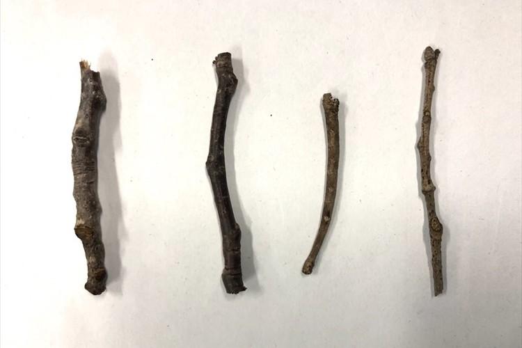 どれが虫か分かりますか?千葉市動物公園のクイズが「すべて枝に見える」と話題に