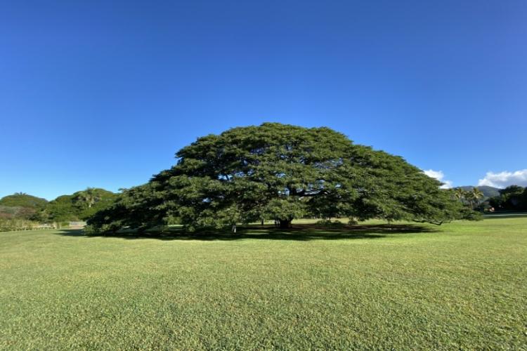 あの有名な「この木 何の木 気になる木」があるのはどこ?日本一有名な木の豆知識