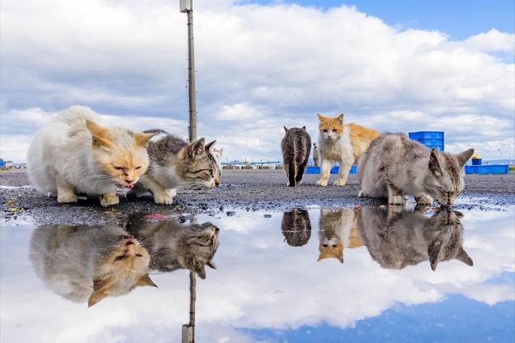 水鏡に映る顔をのぞきこむニャンコたち。雨上がりに撮った癒しの光景が話題に