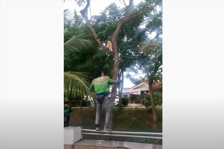 さりげない優しさにほっこり。木から下りられないニャンコを助けようと救世主現る!