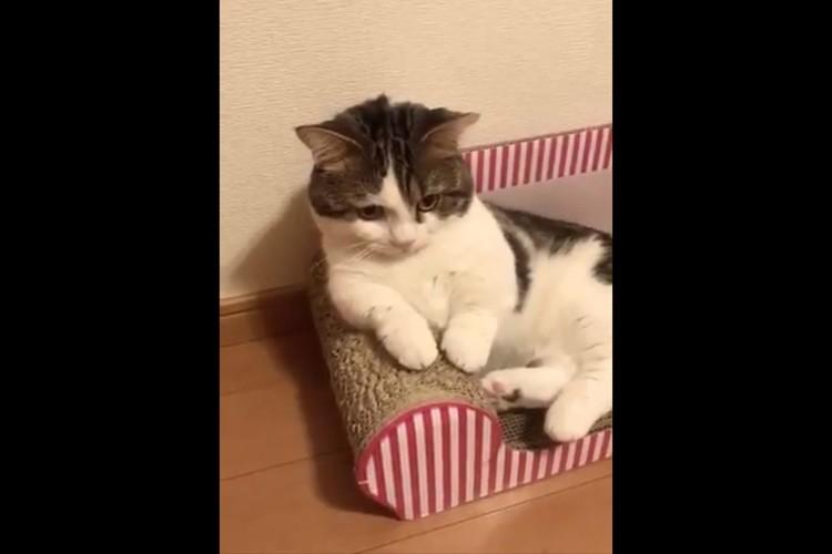 「あっ、おれ猫だった!」急に我に返るニャンコが面白カワイイ