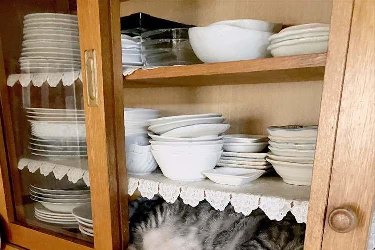 収まり方がぴったり過ぎ!台所へ行ったらニャンコが食器棚と一体化していた(笑)