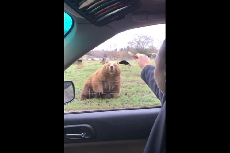 大きな体で俊敏な反応!パンをフリスビーのように投げたらクマがお口でナイスキャッチ