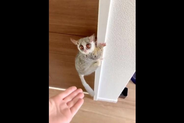 ぴょーんって飛ぶのかと思ったら・・・まさかのそっち!? 階段の降り方に意表を突かれた(笑)