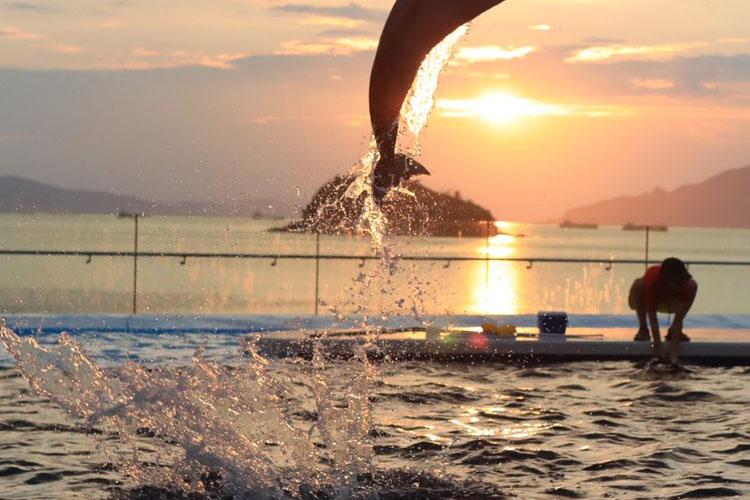 夕陽とイルカが美しすぎる・・・四国水族館で撮れた「ラッセンの絵みたいな写真」が話題に