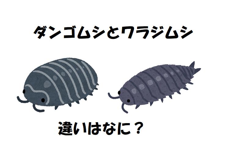 ダンゴムシとワラジムシに違いはある?両者を比較してみた!