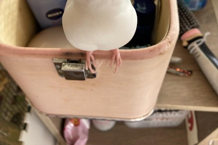 飼い主が化粧をしている最中、お行儀良く見つめてくる文鳥が可愛すぎる!