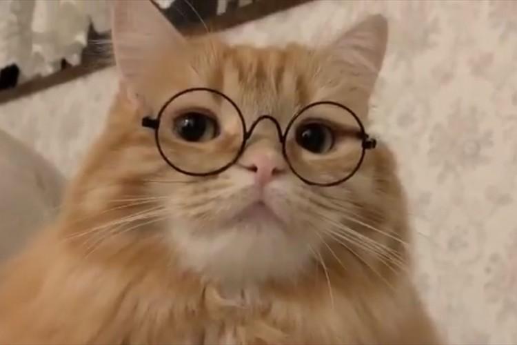 小説を持っていたらさらに完璧(笑) 丸メガネが似合いすぎるニャンコの動画が最高!