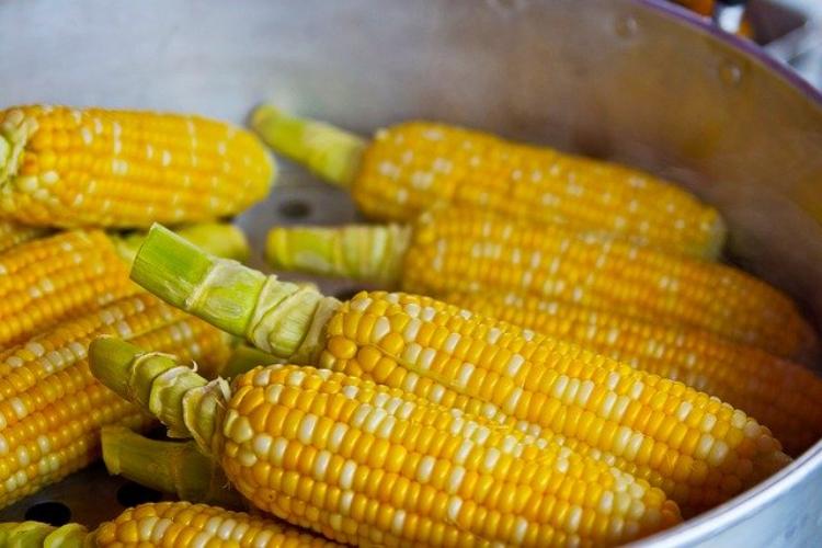 トウモロコシと一口に言っても、実は大きく6種類もあるって知ってました?