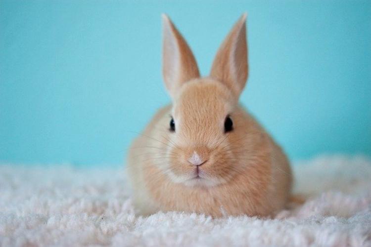 ウサギは寂しいと死んじゃう・・・というのは都市伝説?!むしろ構われすぎる方が嫌い?