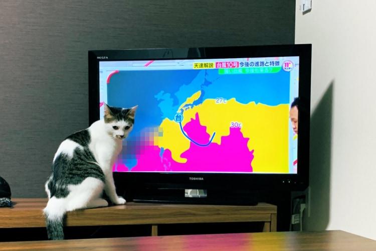 気象予報ネコが爆誕!こんな天気予報があったら欠かさず毎日チェックしたい