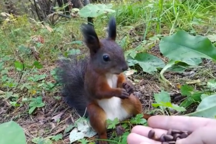 餌をあげた野生のリスがフリーズ!リスだけ時が止まったかと思う面白ビックリな動画が話題に