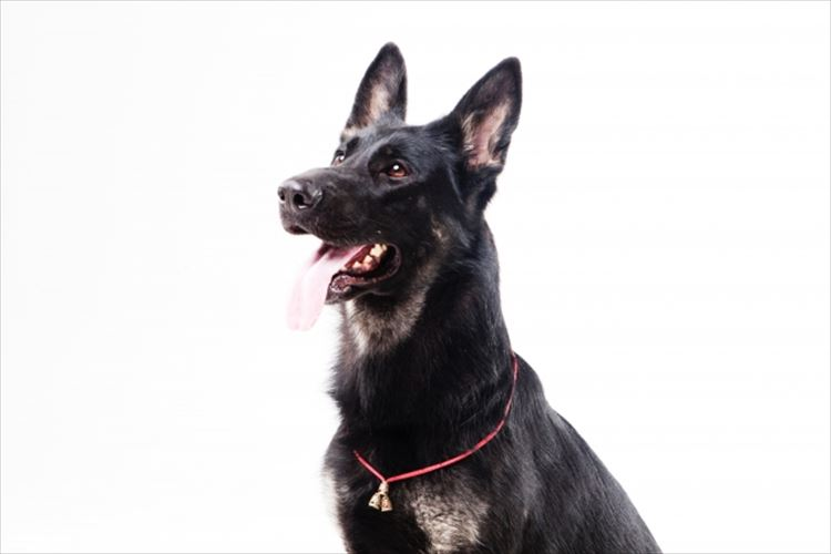 PCR検査より速くて正確?コロナ探知犬がフィンランド空港で稼働開始!