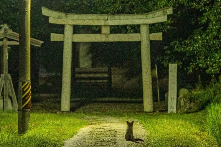 ここから物語が始まりそう!奇跡的に撮れた「神社と狐」のショットがめちゃくちゃ神秘的
