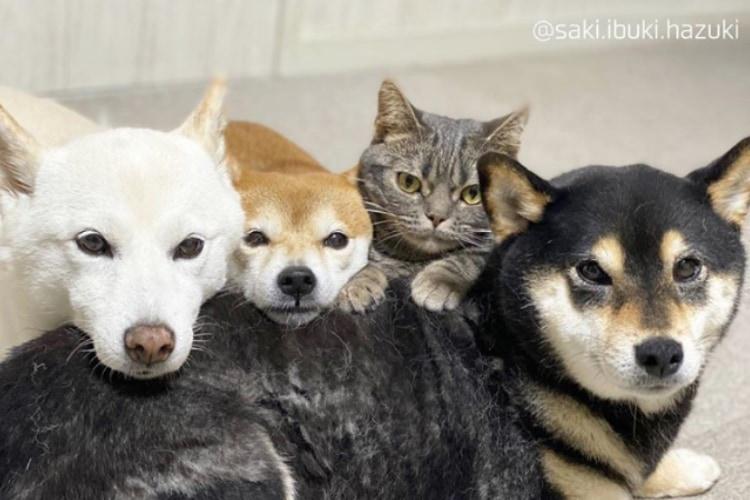 「僕もワンコだニャン」海外やテレビでも話題の犬3匹+猫1匹の仲良しきょうだいが尊い!