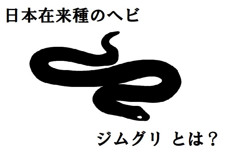 【ジムグリ】子供の頃は赤い派手な体、大人になるとシックな体色に変化する日本の在来ヘビ
