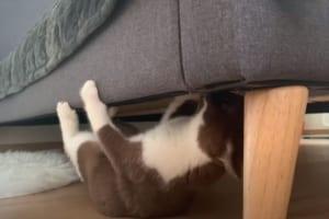ベッドの下で何をするかと思いきや、トンデモナイ特技を披露したニャンコが話題に!