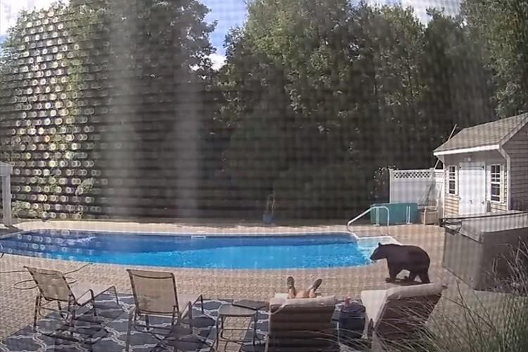 危ない!プールサイドで眠っている男性にクマが接近!絶体絶命の危機も意外な展開に・・・