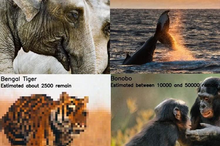 絶滅の危険度が一目で分かる!絶滅危惧種の個体数をピクセルで表現した画像が話題に!
