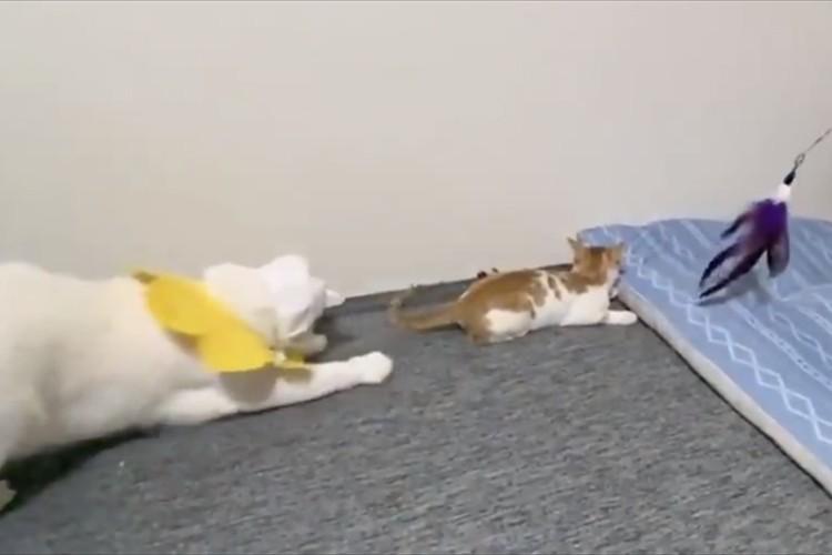 会心のツッコミが炸裂!完成度の高い猫漫才が面白すぎると話題に!