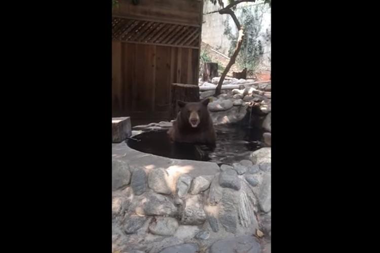 いい湯だな~ まるでオッサンのように入浴中のクマ(笑) 見ているだけで癒されると話題に!
