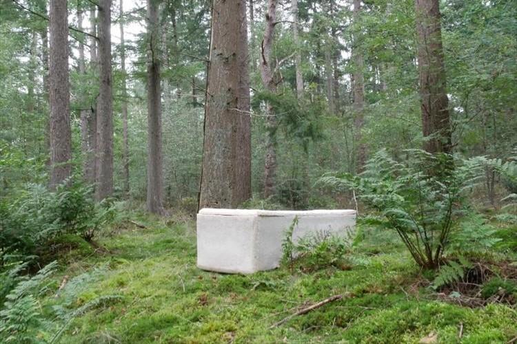 納められた遺体を分解して自然に還す。「キノコの棺桶」が世界中で話題に!